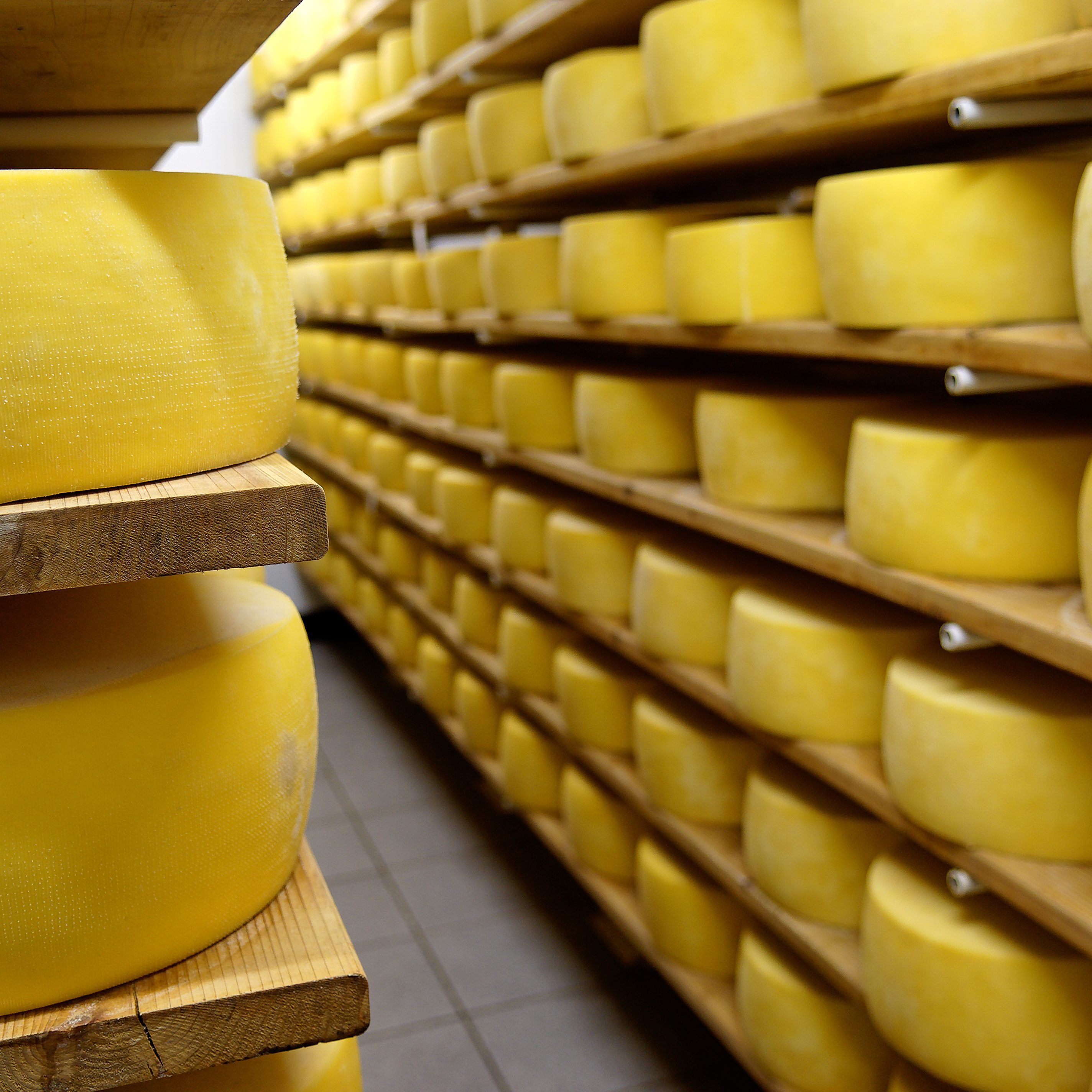 Cheese in shelves at dairy in Pico Island, Azores, Portugal. Storage room.